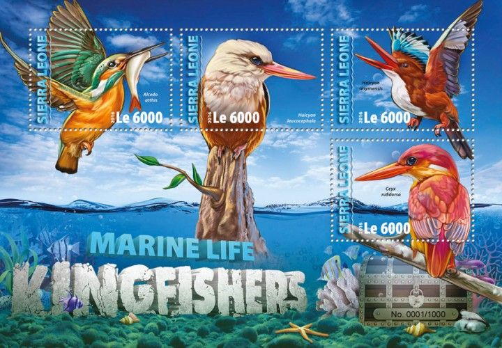 SRL16311a Kingfishers (Alcedo atthis; Halcyon leucocephala; Halcyon smyrnensis; Ceyx rufidorsa)
