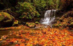autunno, foresta, cascata, pietre, fogliame, natura