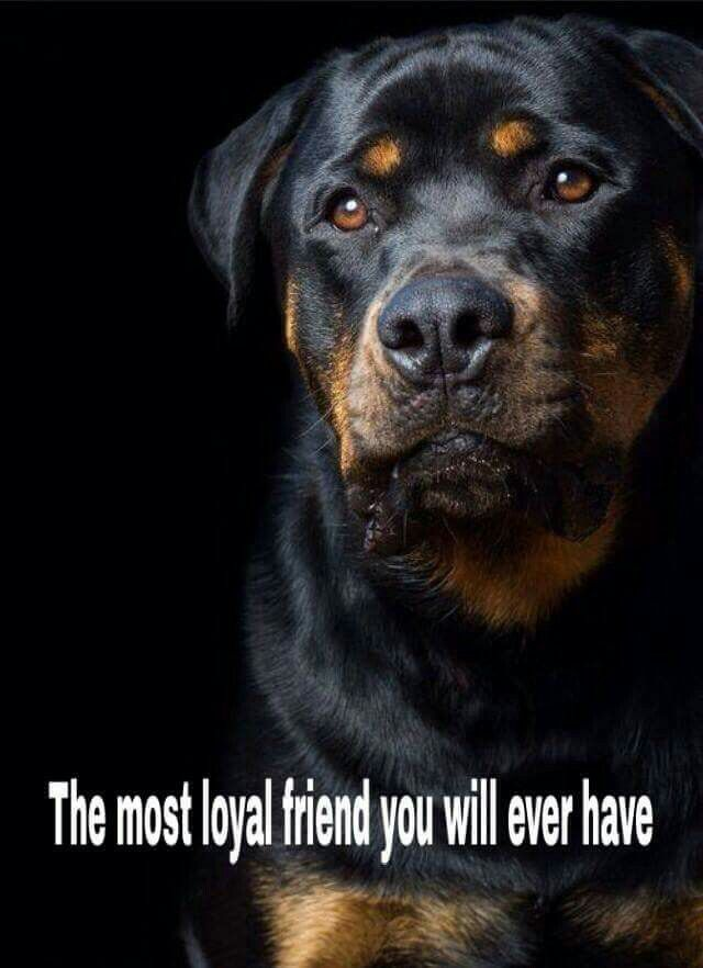 My Brother Had Three Rottweillers That He Dearly Loved...Psycho..Maniac..And Mad Max..They Were His Babies..He Trained Them Well..Jimmy Had A Way With Animals And They All Loved Him....