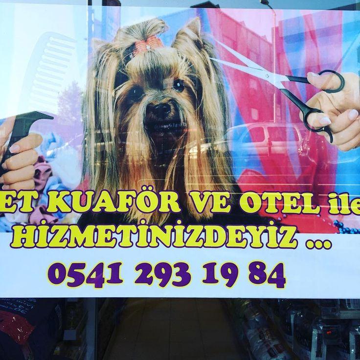 #yaz #traş #saç #toka #acarkent #beykoz #nefes #cat #dog #köpek #kedi #göksu #goksuevleri #anadoluhisari #anadoluhisarı #veterinary http://turkrazzi.com/ipost/1517320201081940643/?code=BUOmq8MA2qj
