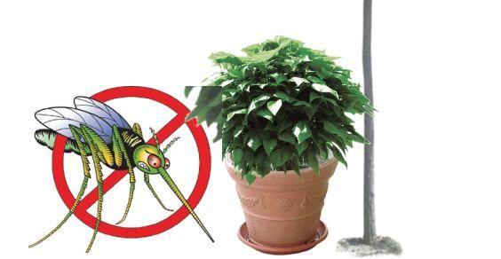 5 piante antizanzare: ricordiamocene per il prossimo anno ormai...