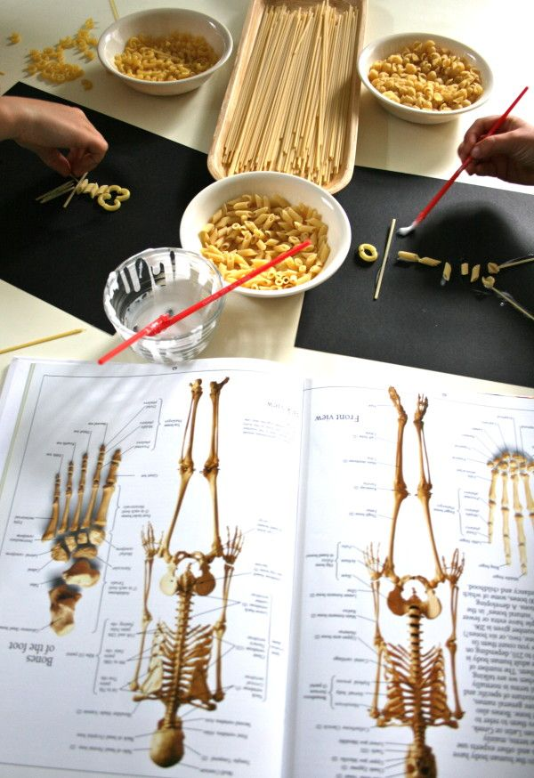 Dem Bones: Learning About the Human Skeleton with pasta