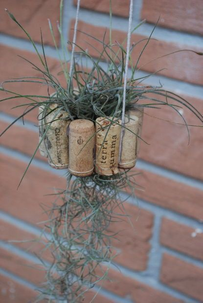 Hanging Air Plant Basket from Recycled Wine Corks #recycledwinebottles