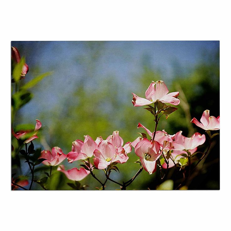 KESS InHouse Angie Turner 'Pink Dogwood'-Digital Floral Dog Place Mat, 13' x 18' ** Find out more details by clicking the image : Dog food container