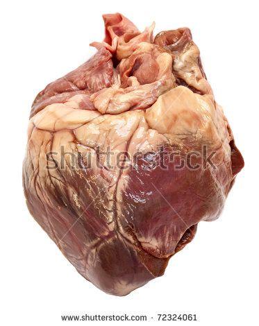 Mejores 8 imágenes de Heart en Pinterest | Corazón humano, Anatomía ...