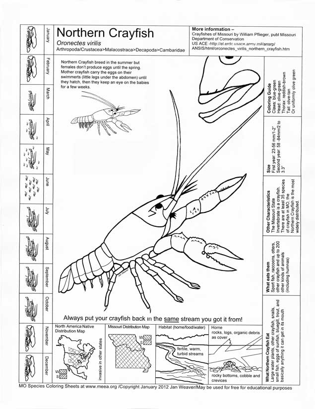 Northern Crayfish coloring and info sheet Cycle 1 Week 7