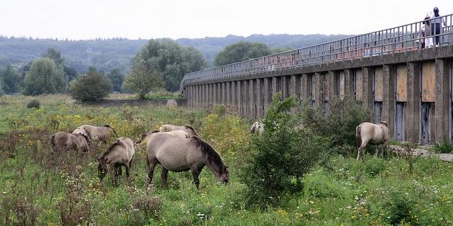 Natuurgebied Meinerswijk in Arnhem