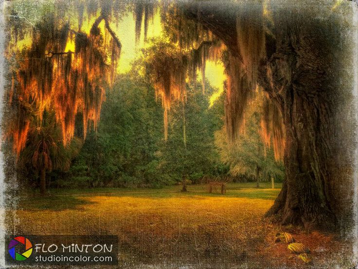Shot in Beaufort, SC with Lumix LX7, post processed in Photoshop with Nik Software Plugins and canvas texture from a private collection.   #Beaufort #SouthCarolina #plantation #NikSoftware #sunset