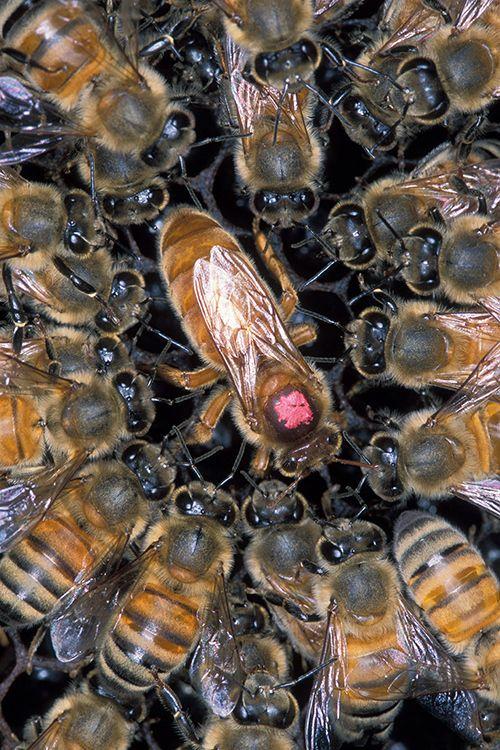 Pčela - Page 2 1b54ae7d82bf942bec01f8cb8f84d2e0