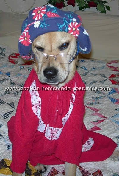 coolest dog halloween costumes photos and howto tips