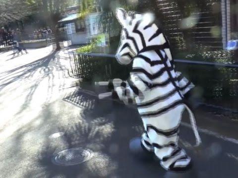 Zookeepers Apprehend Escaped Zebra in Annual Drill - Neatorama