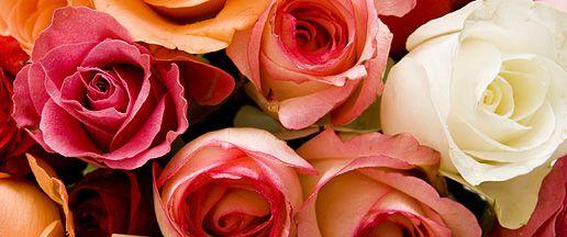 Fairtrade roser