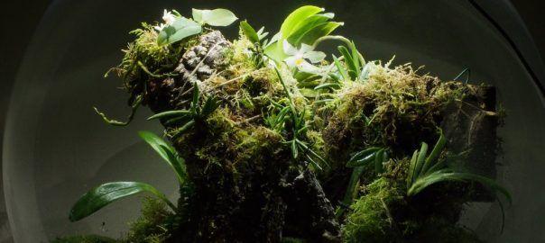 White Orchid BiOrbAir Terrarium Planting List - Pumpkin Beth