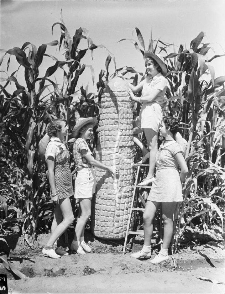 Women Posing with Giant Ear of Corn at the Pomona County Fair  by  Unknown Artist