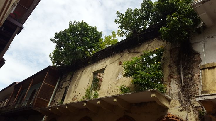 Tree growing into an old building