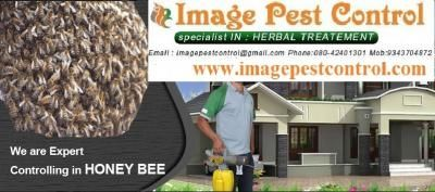 Honey Bee Removal and Control in Bangalore - India, World - Free Classifieds Sites