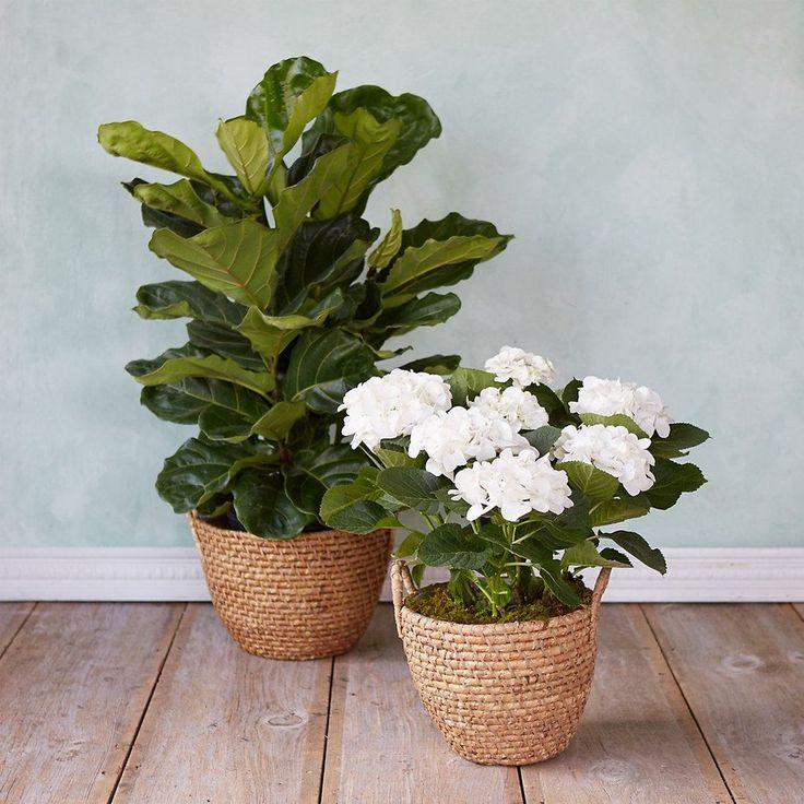ideas nuevas para nuestras plantas y flores preferidas
