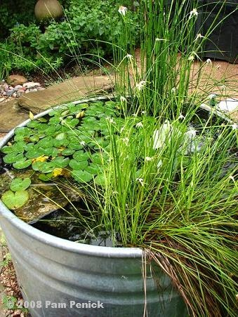 Container ponds using stock tanks/cattle troughs