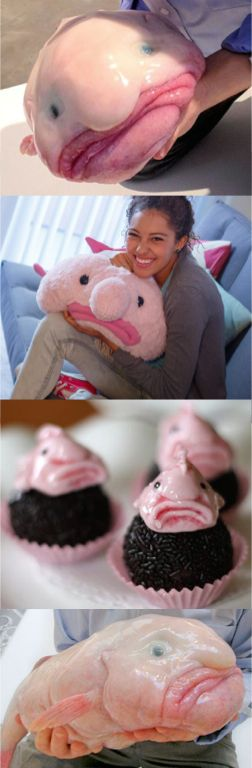 The blobfish (voted ugliest creature on the planet) and its merchandise