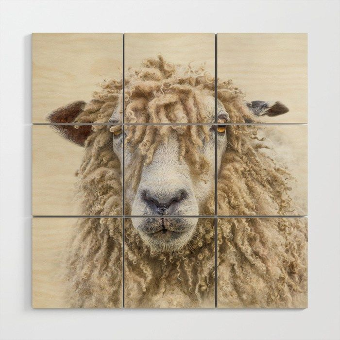 Leicester Longwool Sheep Canvas prints, Sheep, Canvas