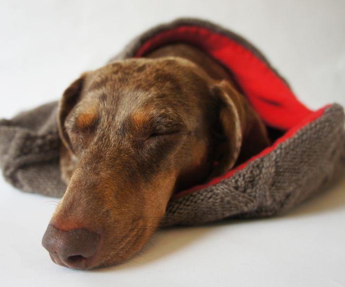 Saco de Dogs Department