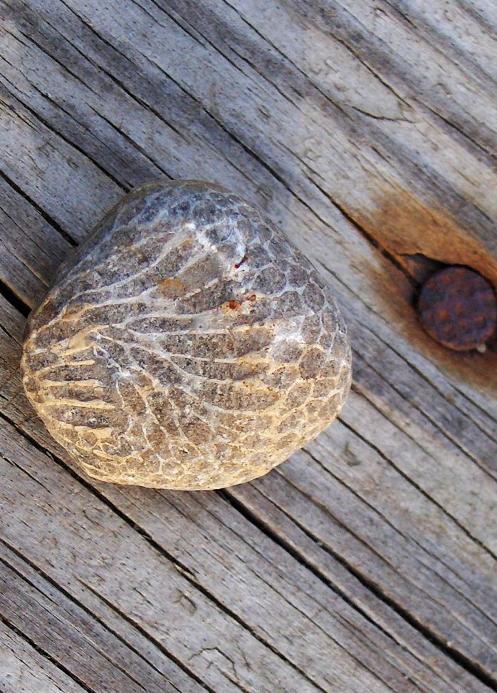 Side view of Charlevoix Stone - Often mistaken for Petoskey stone, but made of a different type of coral,