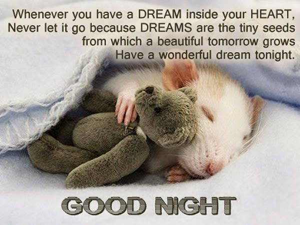 In this post, we share some cutest good night quotes and messages, beautifulgood night picturesfor the one you love. At the end of the day, it's time to good night someone you love and care about Good night quotes for her/him My idea of a good night has always been having a lovely meal and …