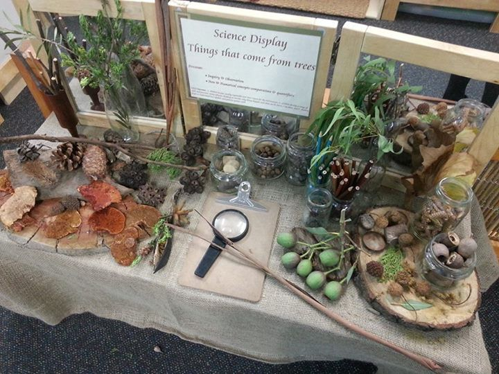 "Beautiful table to explore things that come from trees - from Forever Friends ELC and Kindergarten ("",)"