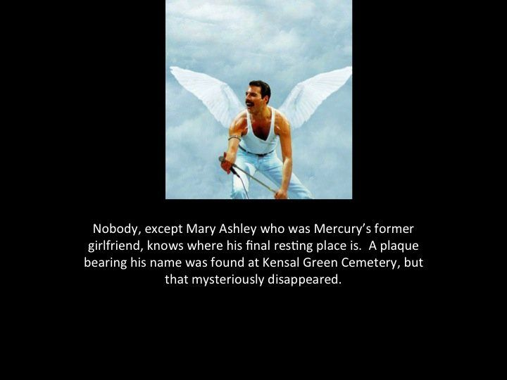 Freddie Mercury Fact Comp