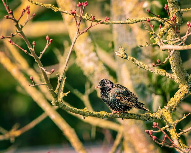 Claes`s Photo blog: birds in the sunshine