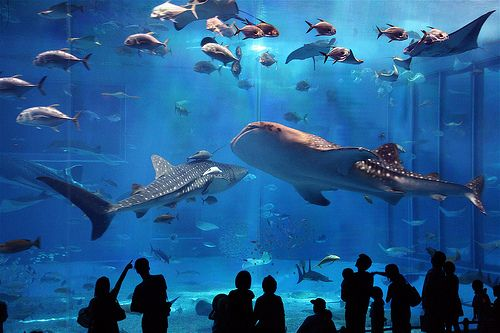 This would be a really big vacation, but I want to go to the Georgia Aquarium to see their whale sharks! You can also do a dolphin, beluga whale, or sea otter animal encounter along with a behind the scenes tour. It's only 11 hours from where we will be living in Michigan! :) And the best days to fly are Wednesdays and Saturdays because they're generally inconvenient for most travelers so flights are often the least full.
