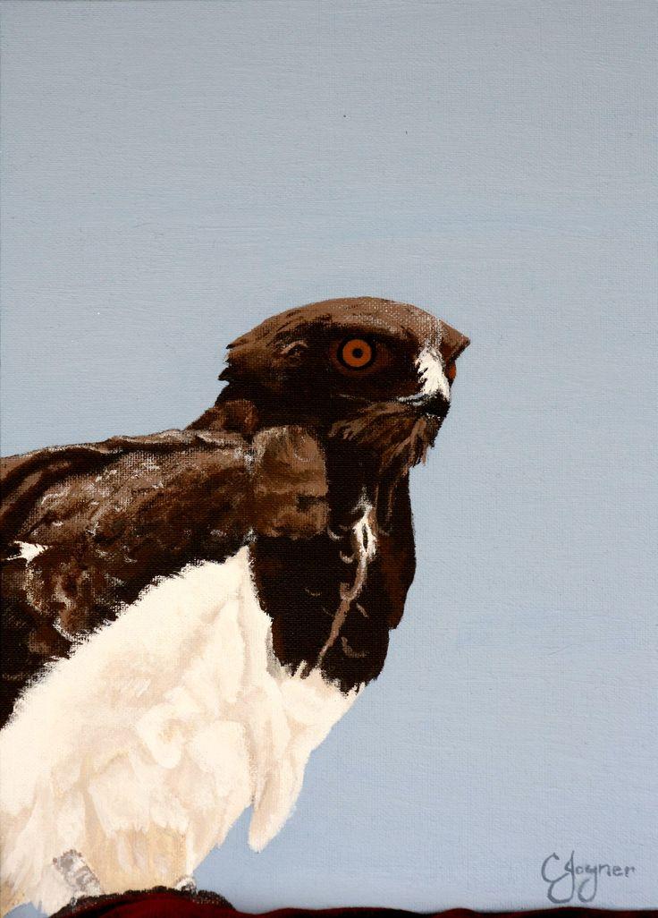 Bird of Prey (CJoyner)
