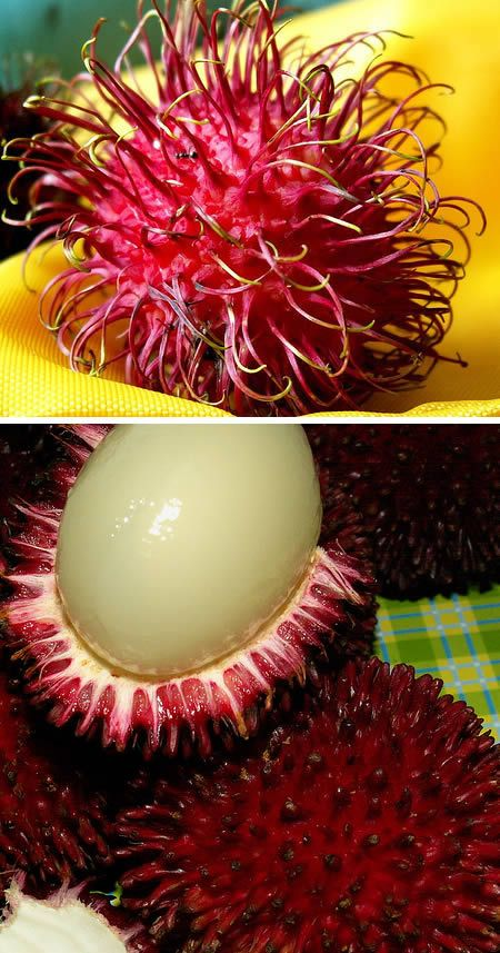 This is the strangest looking fruit ever. Rambutan in Malay, Indonesian, and Filipino literally means hairy, caused by the 'hair' that covers this fruit. On the outside it's magenta with green hairy legs all over it. From the outside you'd have no idea what to expect on the inside. Inside it's similar to a lychee fruit. It looks sort of clear and gummy. It's very watery and has a huge seed in the center. It tastes pretty decent, but it's the look of the ramputan that puts it in the top ten.