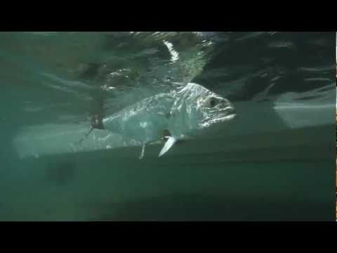 "Fly Fishing DVD :: PREDATOR :: Drake Video Awards winning film ""Best Movie"" 2012 - YouTube"
