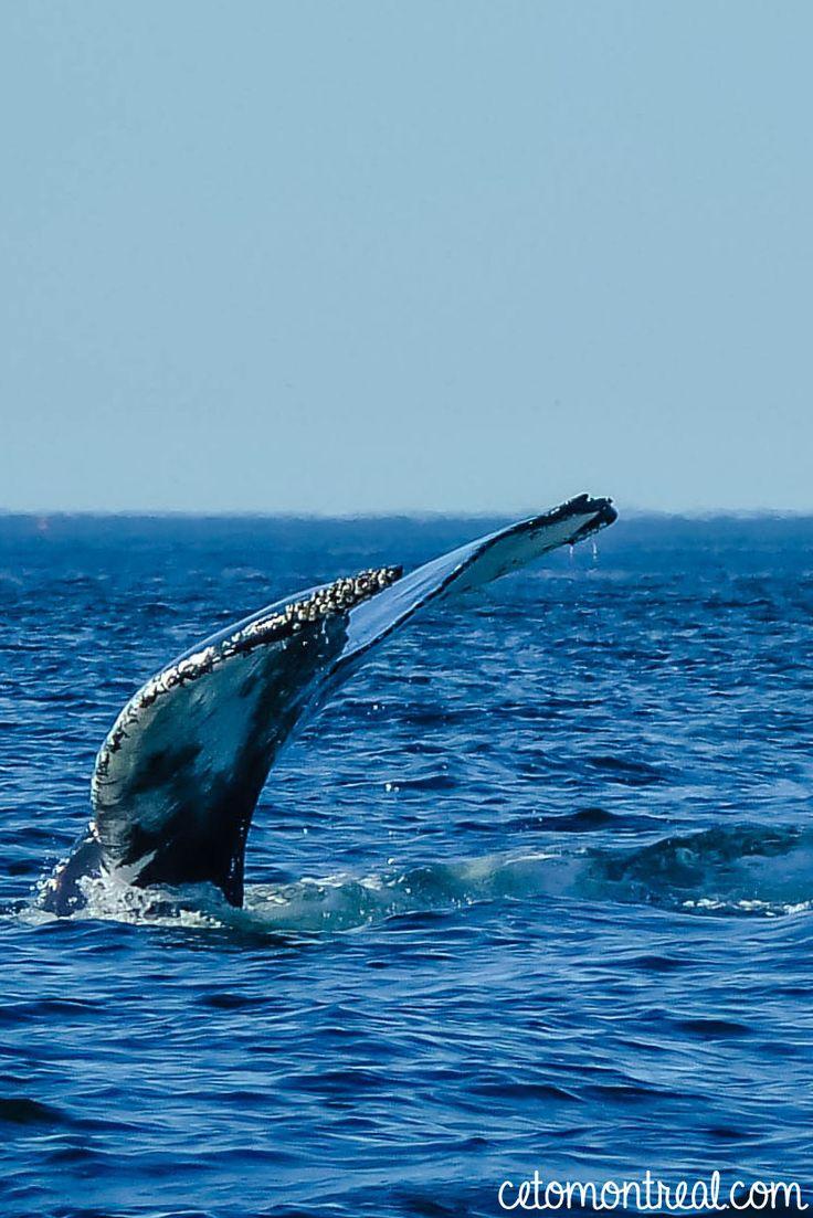 Aller voir les baleines à Tadoussac au Québec