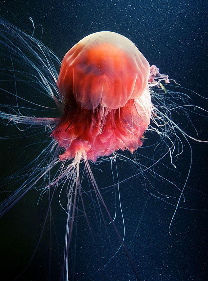 Flori subacvatice - fotografii cu meduze
