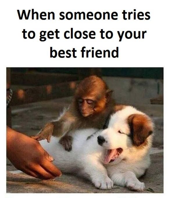 Humor Inspirational Quotes: Best 25+ Best Friends Funny Ideas On Pinterest