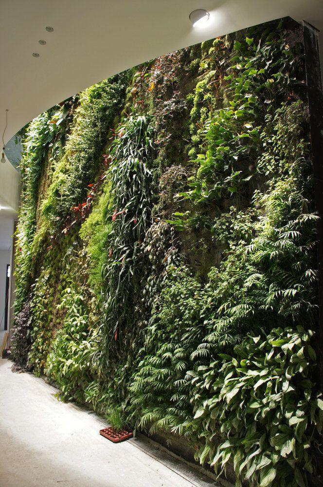 how to make an indoor wall garden