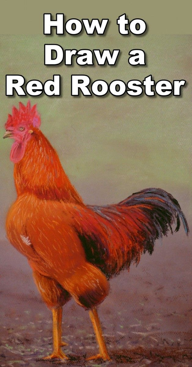 How to Draw a Red Rooster in Pastel — Online Art Lessons