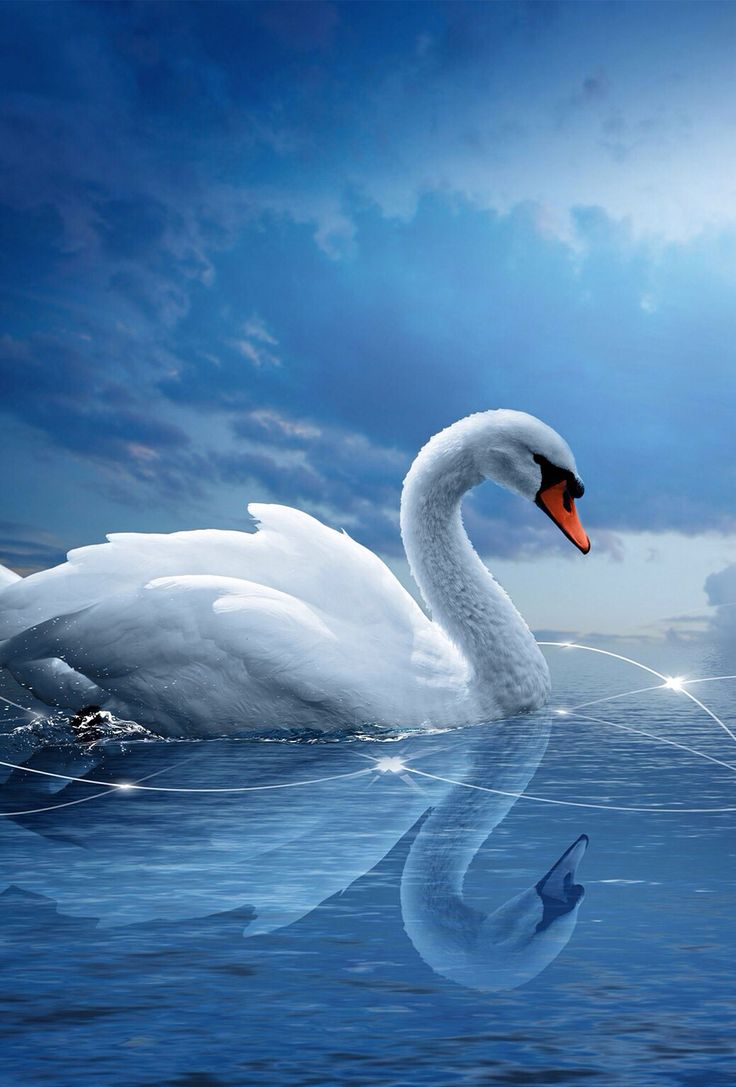 17 images about animal backgrounds on pinterest fish for Cool fishing wallpapers
