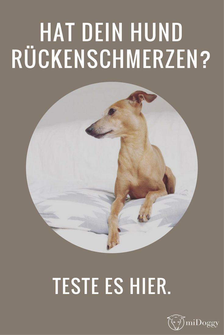Rückenschmerzen | Hund | erkennen | Hilfe