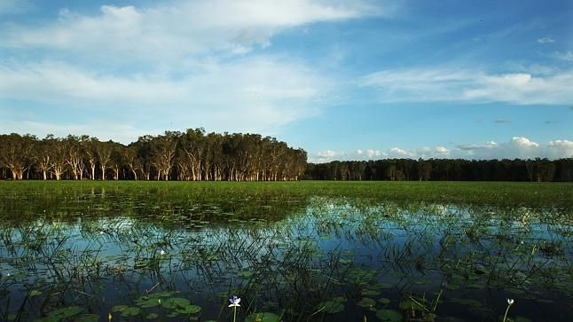 Photographers' Top End paradise at Bamurru Plains in #NTAustralia . Via @Financial Review