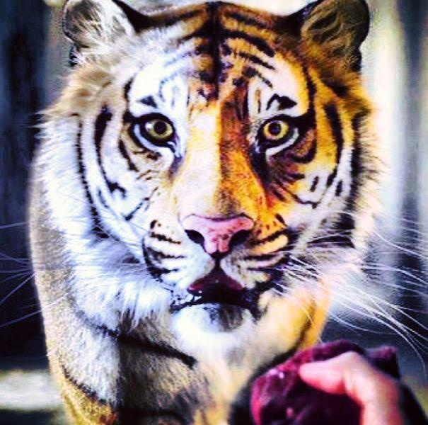 84 best life of pi images on pinterest life of pi movie for Life of pi animals