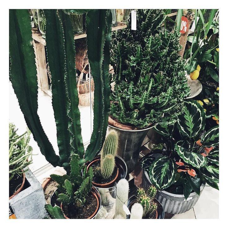 Świetny intensywny i bardzo produktywny weekend za mną. Ale ale - znalazł się też czas na odpoczynek i drobne przyjemności.  Idealny balans  _______________  #kaktus #kaktusy #cactus #cactusgallery #floral #plants #rośliny #green #zielonomi