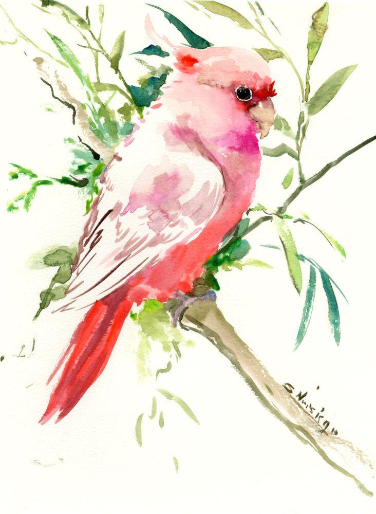 pink cockatoo artwork original watercolo 12 x 9 in pink pets birds bird lover art bird artwork pet artwork parrots pink green