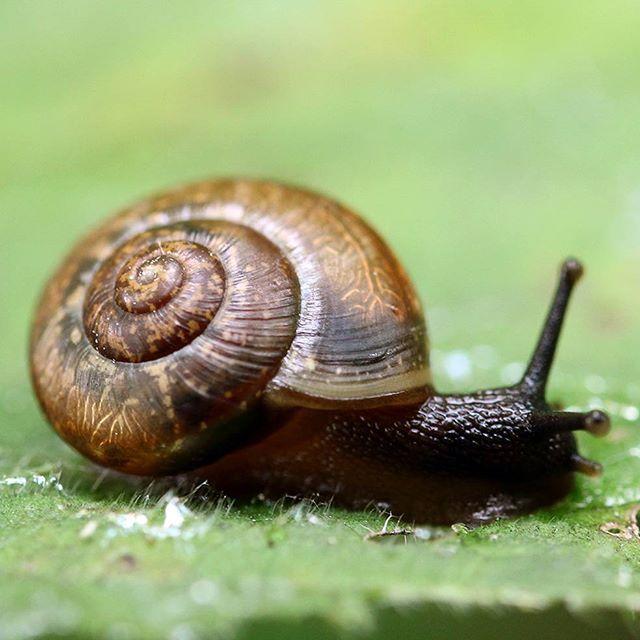 #snail #macro_vision #macrophotography #slug #nature #canon #canonphotography