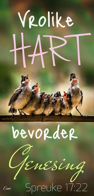 """Teks - """"'n Vrolike hart bevorder genesing..."""" Spr 17:27 #Afrikaans #Happiness #Scripture"""