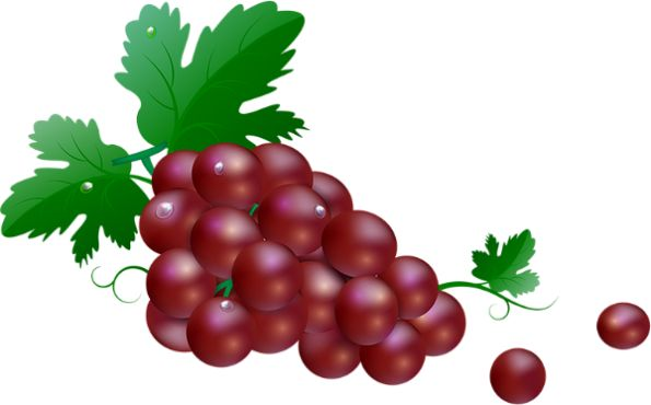 Rura: winogron - Winogrona przezroczysty png - Trauben - Uvas