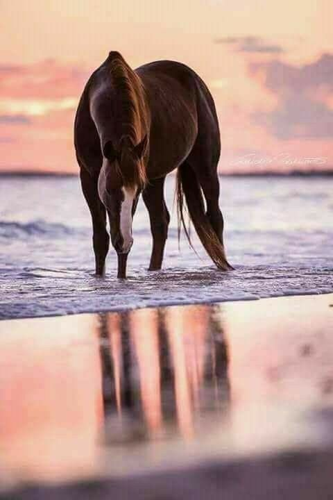 Stunning horse at the beach, so dreamy!