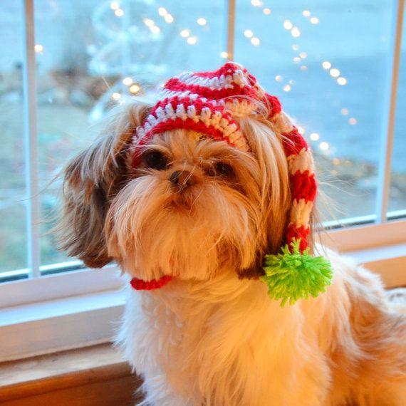 SLEEPY SANTA Stocking Hat  Christmas pet hat by StylinDogsBoutique, $10.00